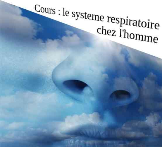 [cours] Le système permettant la respiration chez l'Homme