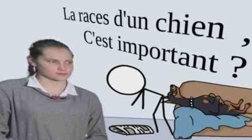 La race d'un chien, c'est important ?