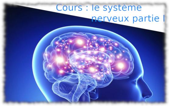 5e / 4e – système nerveux, partie I & II (cours)